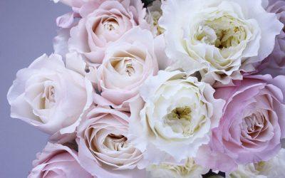 La magia delle rose