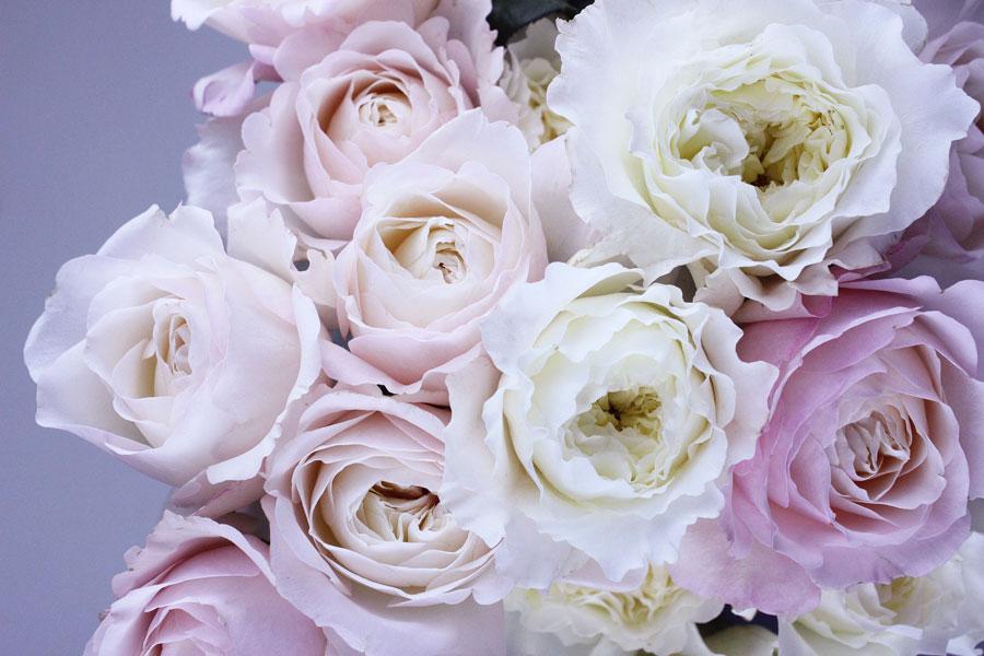 Blog La Magia Delle Rose