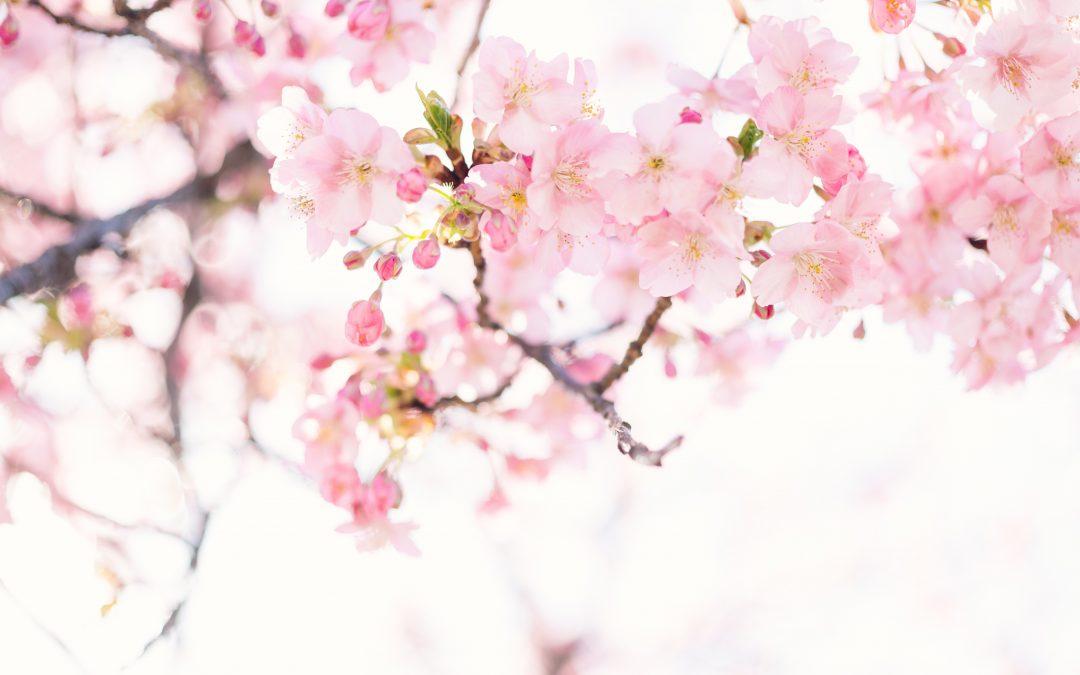 Crea il tuo makeup di primavera